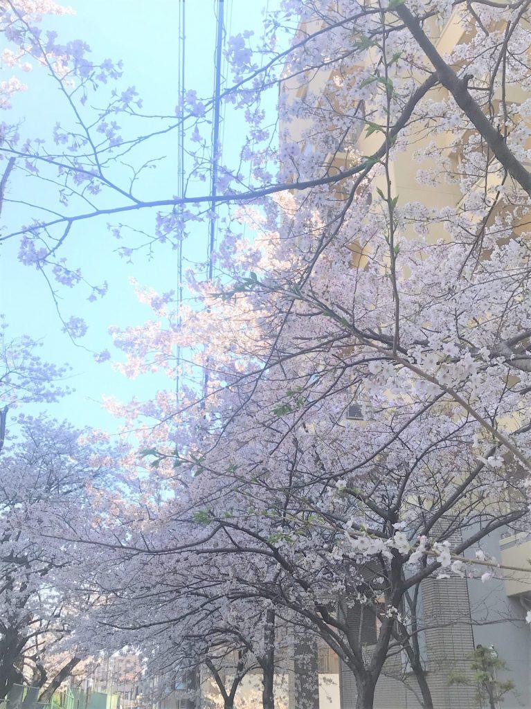 桜花絢爛!コロナに負けない!!