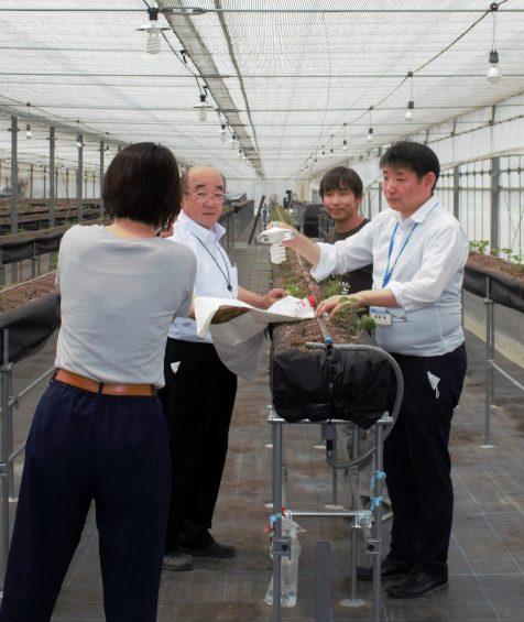 Panasonic+小泉製麻はUV(紫外線)による「植物の免疫力UP+病害虫抑制」技術連携